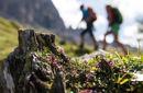 Sommerzeit im Pfösl-Wir leben Berge