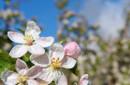 Blütenzauber-Wochenende im Vinschgau