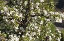 Apfelblüten Short Stay