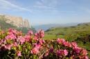 Almblütentage auf Monte Piz