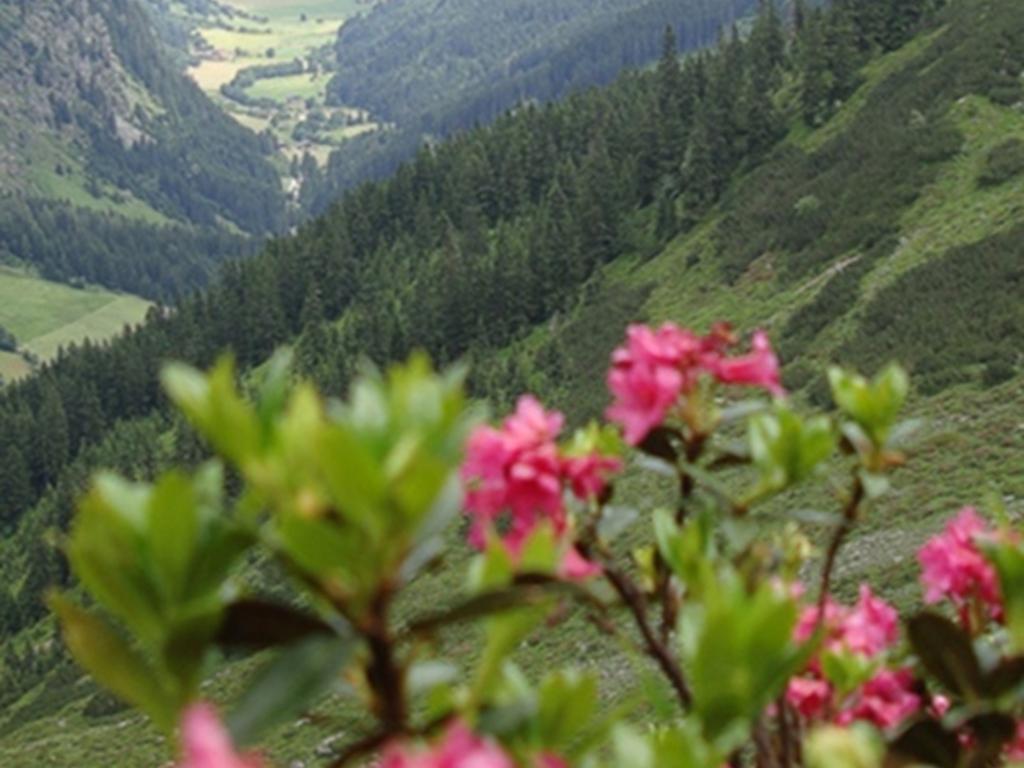 image: Alpine rose weeks
