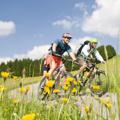 Andare in bici o in mountainbike
