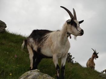 Animals in Merano