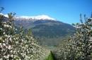 Südtiroler Apfelblüten-Aktiv-Tage