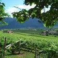 Appiano sulla strada del vino