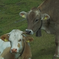 Bauern in Terenten