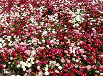 Blumen in Meran