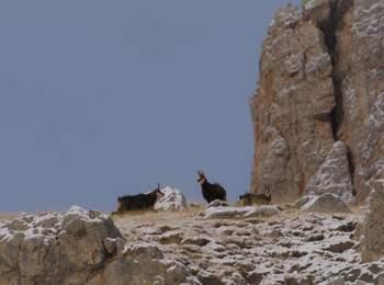Caccia in Alto Adige
