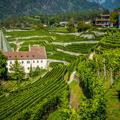 Das Weingut vom Kloster Neustift