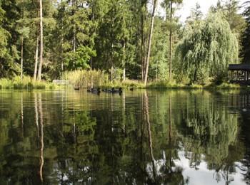 Der Weiher im Kurpark Niederdorf