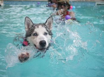 Dog swimmingpool