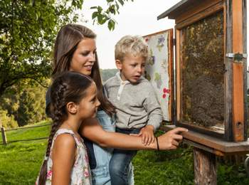 Educational trail at the museum of apiculture