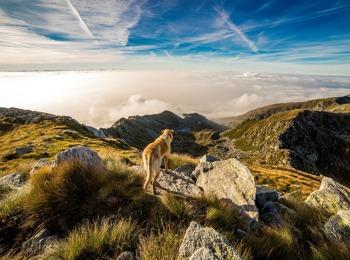 Escursioni con il cane