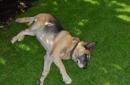 Ferienwohnungen mit Hund