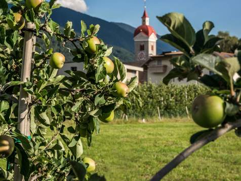 Fioritura dei meli a Naz-Sciaves