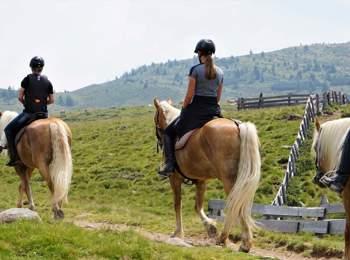 Gita a cavallo su un Avelignese