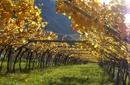 Mit dem Winepass durch den Herbst
