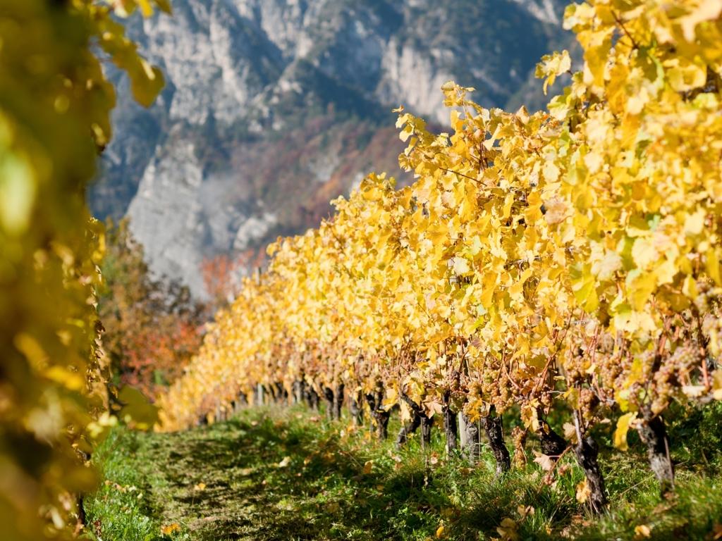 image: Herbstwandertage