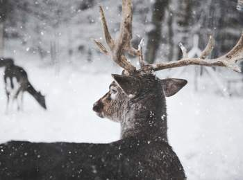 Jagd in Südtirol