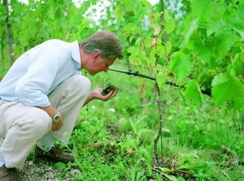 Manincor – DAS Weingut Südtirols
