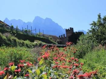 Maso delle erbe biologiche Pflegerhof a Castelrotto