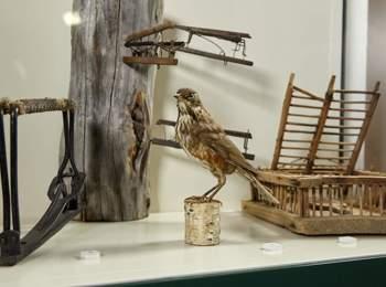 Museo di caccia e pesca in Alto Adige
