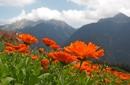 Die Farben der Natur - Naturlebensschule Ulten