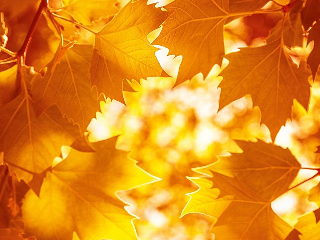 image: Novembre 3=4