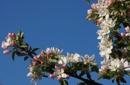 Frühlingserwachen im Burggräfler-Ferienparadies