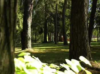 Park mitten in Niederdorf