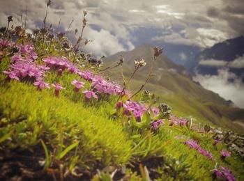 Pascolo di montagna a Paznaun - Ischgl