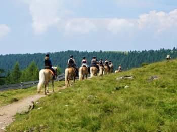 Reitergruppe mit Haflingern