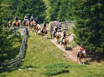 Riding on Haflinger horses
