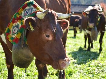 Rientro del bestiame