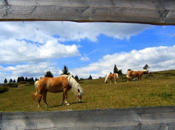 Seiser Alm pasture