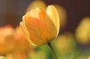 Frühlings- und Vorteilswochen (6+1)
