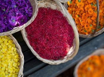 The beauty of colours of flowers and herbs