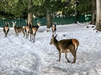 Tierpark Gustav Mahler in Toblach