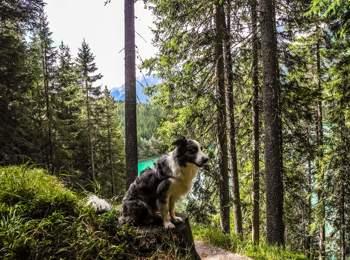 Vacanze con il cane al Lago di Anterselva