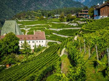 Vinery at Neustift Monastery