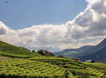 Viticoltura sull'altipiano del Renon