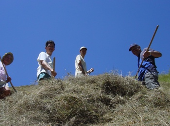 Volunteering in farms in South Tyrol