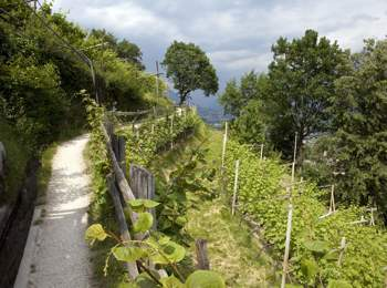 """Waalweg"" path in South Tyrol"