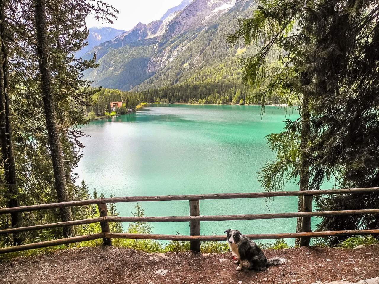 Urlaub mit hund in s dtirol wandern mit hund Ferien am see
