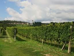 Wein aus Puegnago del Garda