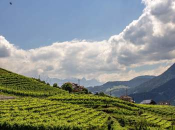 Weinanbau am Ritten