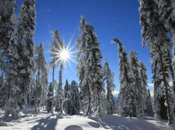 Winter forest in Mölten
