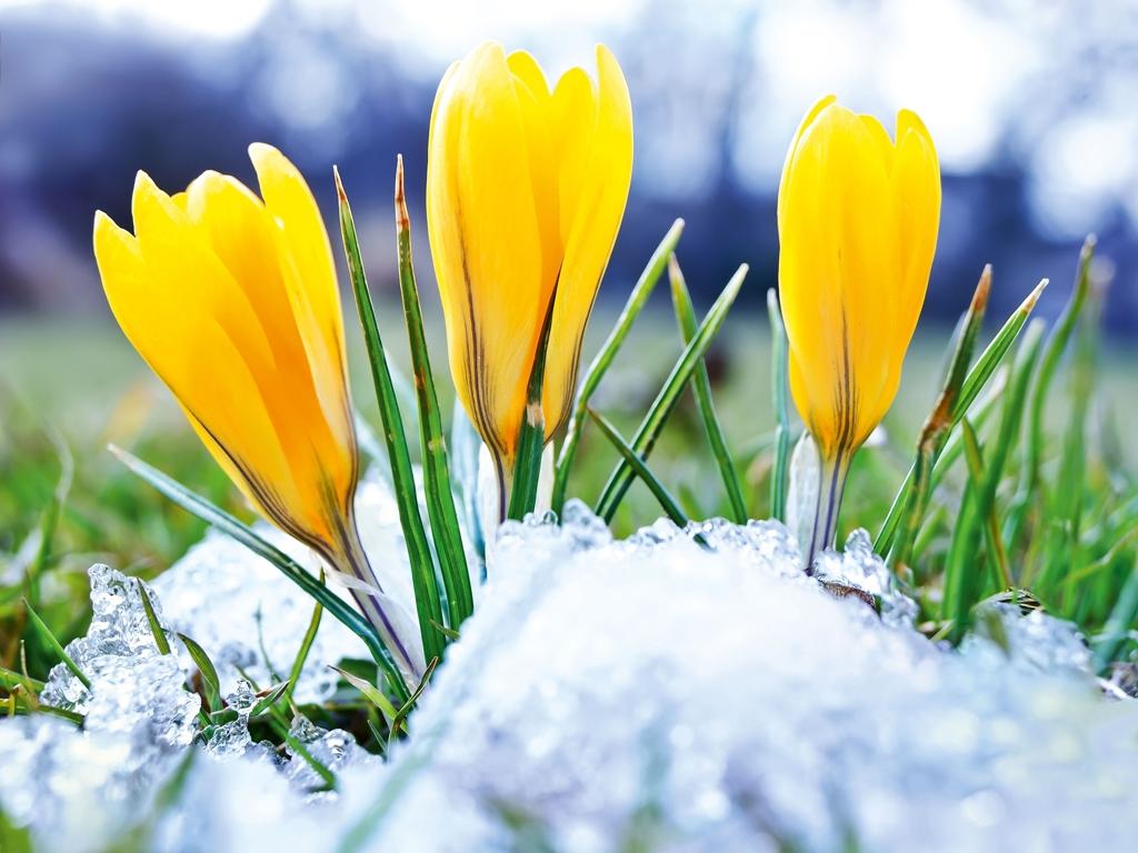 image: Winterausklang